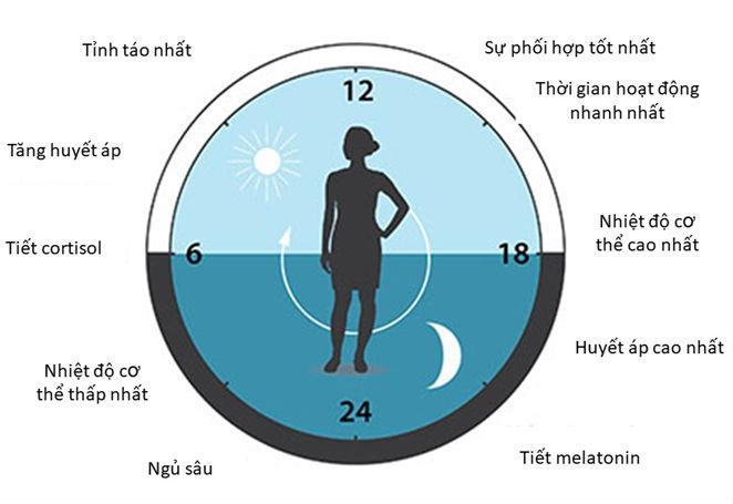 Tác động của ánh sáng lên 2 hormone môn melatonin và cortisol