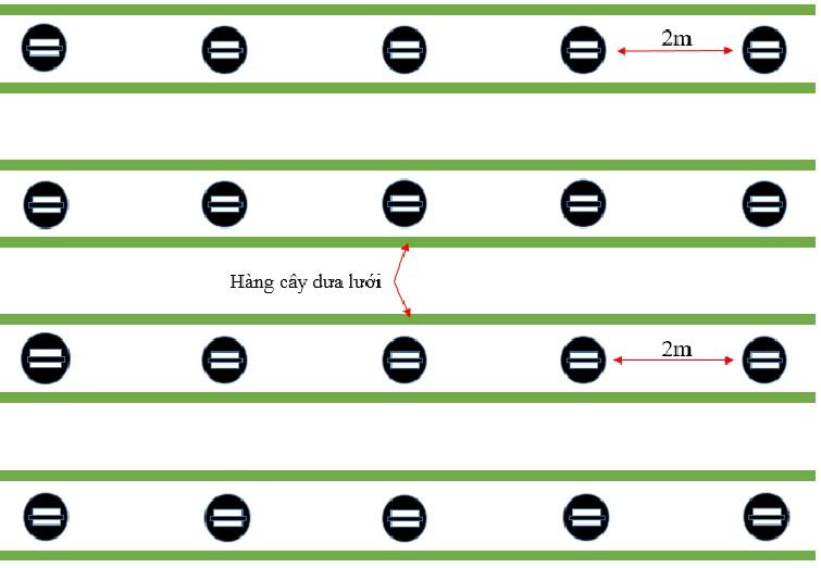 Mô tả lắp đặt đèn dưa lưới