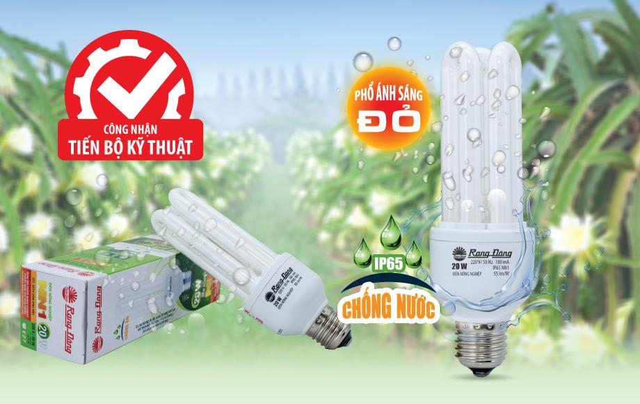 Công nhận tiến bộ kỹ thuật cho đèn compact Rạng Đông điều khiển thanh long ra hoa