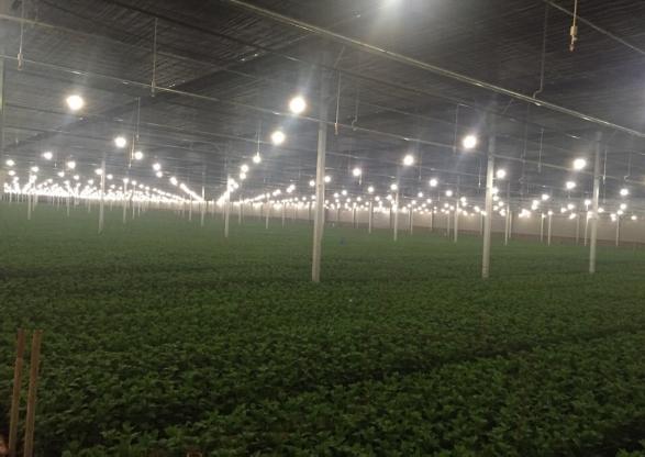 Ứng dụng đui đèn chống nước trong nông nghiệp