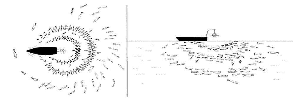 Các loại cá, mực khác nhau có độ nhạy với cường độ ánh sáng khác nhau