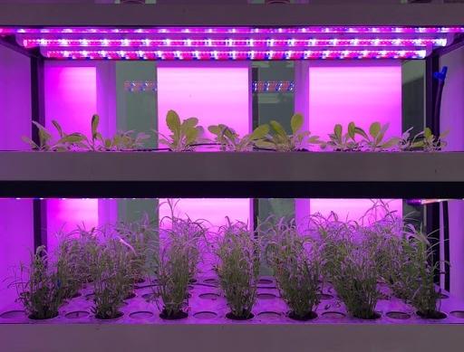 Đèn LED nuôi cấy mô