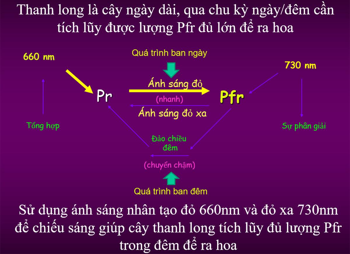 Biểu đồ phổ ánh sáng